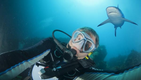selfie-requin